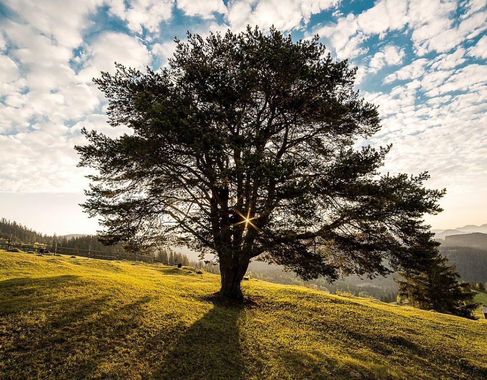 mindfulness superacion charles krauthammer
