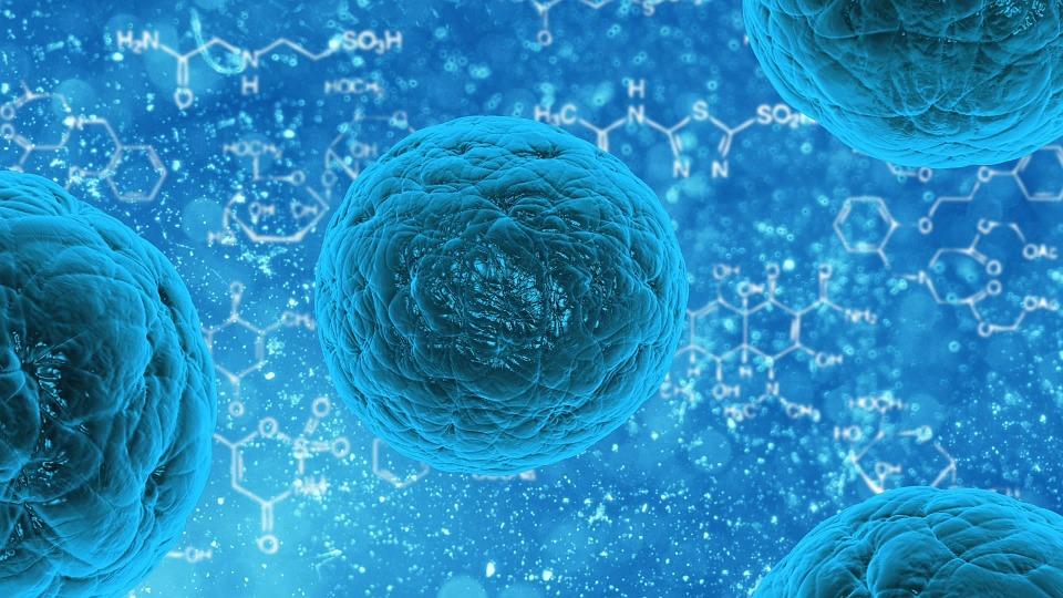 Descubiertas nuevas células madre que regeneran el tejido pulmonar ...