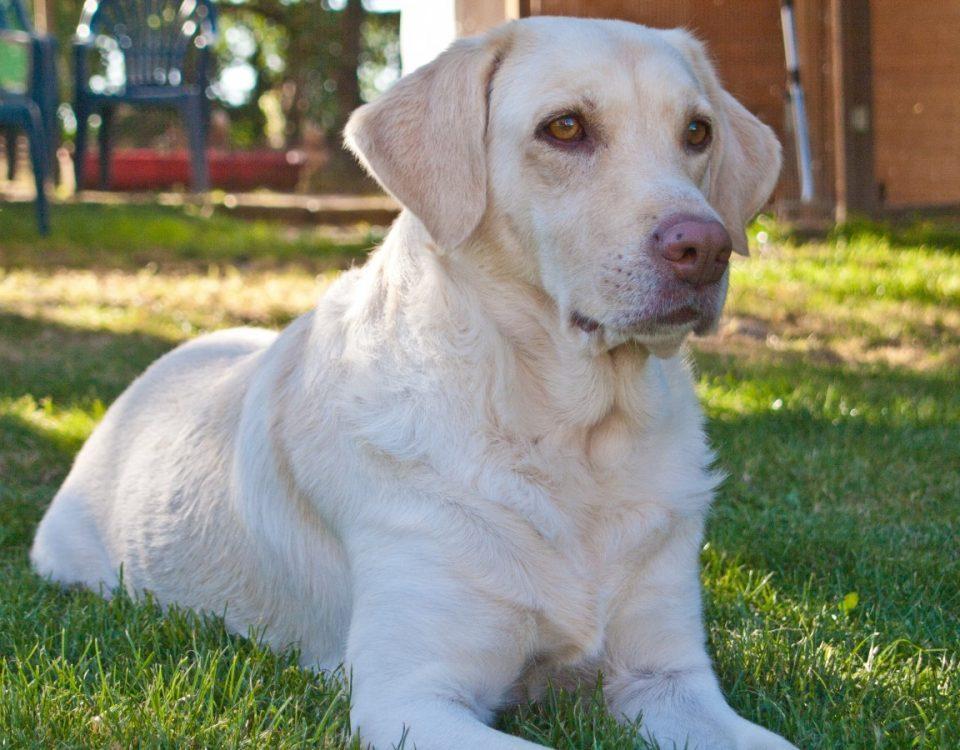 blat gos detecta cancer de pulmo